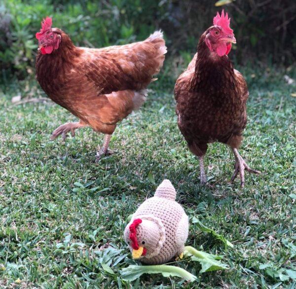 Mamma Hen + Baby Chick + Egg + Nest